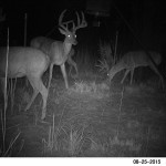 white tail deer hunting 3 bucks